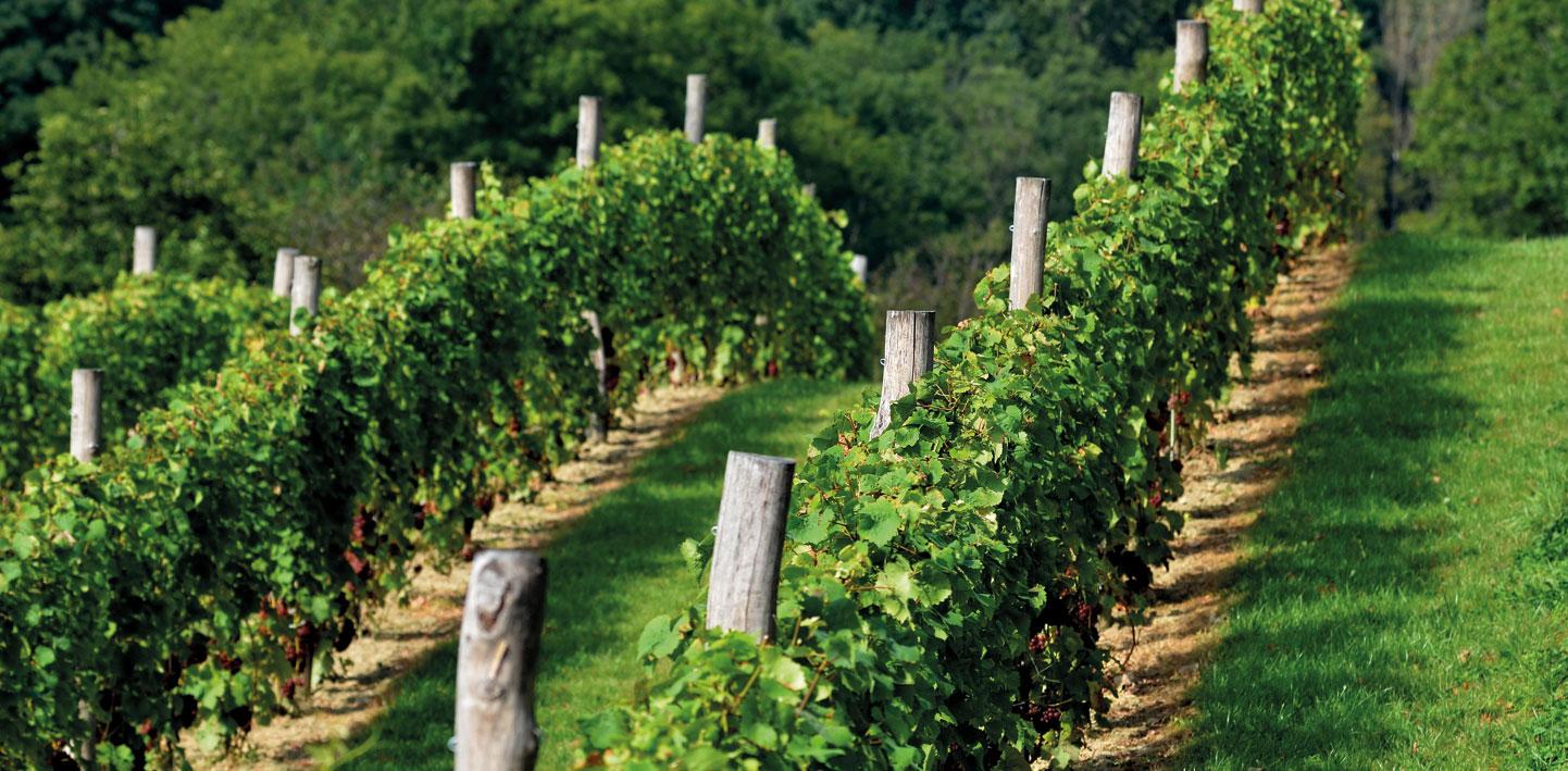 Jakie wino Portugalczycy nazywają zielonym?